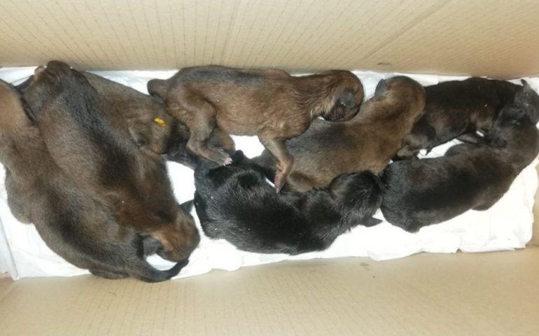 Buttati come immondizia, appena nati a Nuoro: per gli 8 cuccioli si cercano con urgenza balie per allattamento