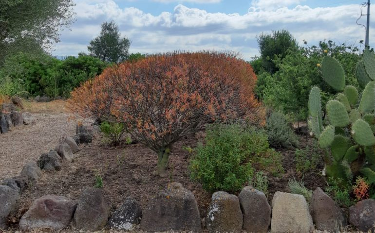 """Il """"Giardino Botanico del Monte Arci"""" apre al pubblico: un'esperienza sensoriale nei profumi del territorio"""