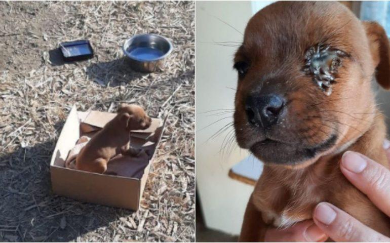 Abbandonato sotto al sole dentro a una scatola di cartone ad appena un mese di vita: in cerca di casa