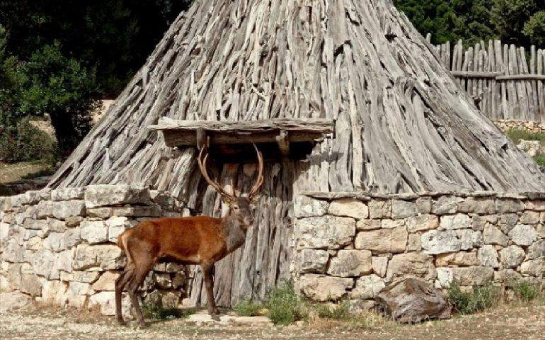 """(FOTO) Sardegna, uno splendido cervo in posa. Forestas: """"Sembra un attore, ma è tutto vero"""""""
