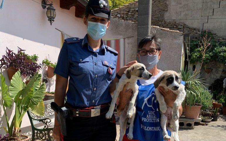 Mandas, affidati ai volontari due cuccioli sequestrati a un uomo che li maltrattava. Ora cercano casa