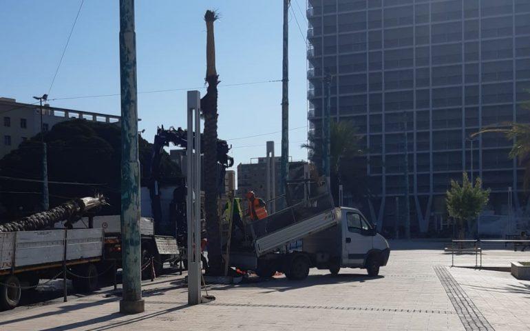 Cagliari, nuove palme nel lungomare del porto: 13 alberi resistenti al punteruolo rosso