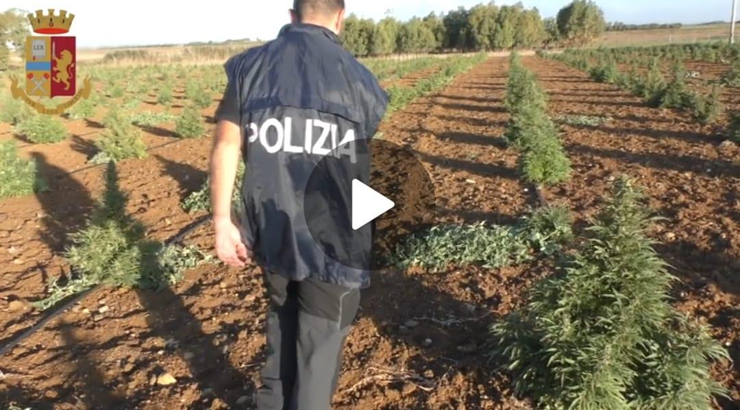 08-10-2021_video_3000_piante_di_marijuana_a_villasor__una_persona_arrestata_e_due_indagate_in_stato_di_libertà.html