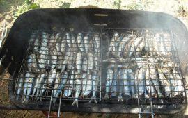 La ricetta Vistanet di oggi: sardine a sa casteddaia