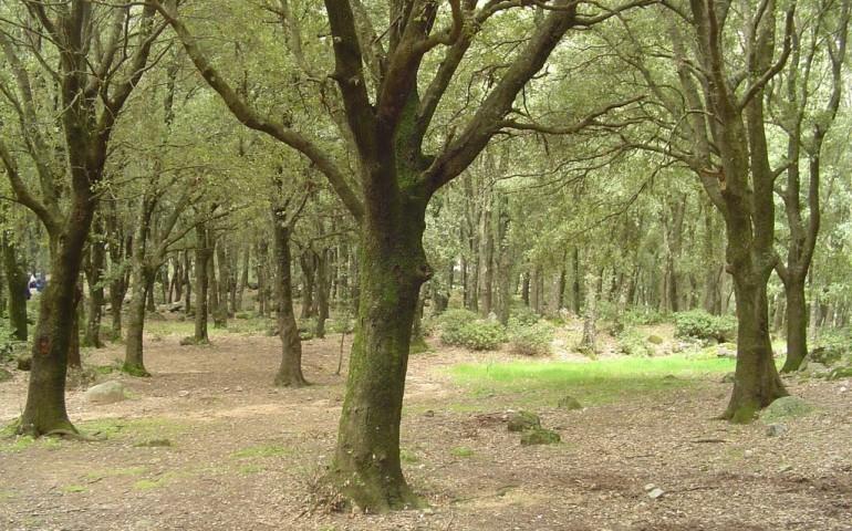 Dalla Regione una pioggia di quattrini per i boschi di dieci comuni ogliastrini