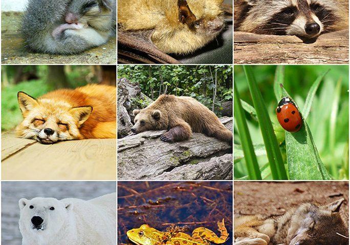 Senza confini volete un primo dell 39 anno originale tutti for Immagini di animali che vanno in letargo
