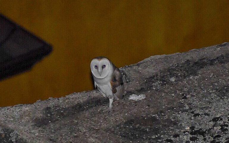 Night Owl sito di incontri