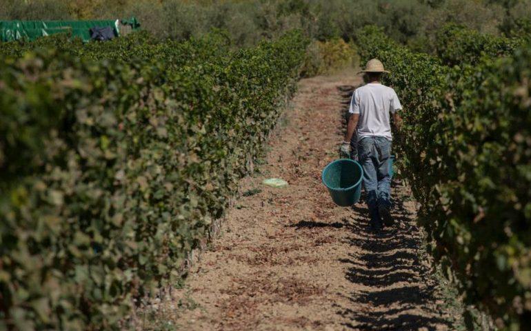 Coldiretti Nuoro Ogliastra: la riscossa della viticoltura tra tradizione e innovazione con giovani e donne
