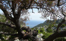 Tra lago e mare, Supramonte e Gennargentu: i comuni di Baunei e Gavoi tra gemellaggio e collaborazione