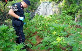 Tertenia, piantagione di cannabis in orto di famiglia. Mamma e figlio nei guai