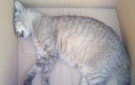 Gatta brutalmente uccisa a Jerzu, la rabbia di un lettore: «Era un animale docile e anziano. Chi ha visto parli»