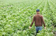 Progetti d'inclusione nelle colonie penali sarde: i detenuti impareranno a coltivare la terra