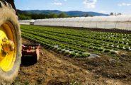 In Sardegna la vita media di un impresa è 12 anni, le più longeve quelle agricole, quelle turistiche chiudono prima