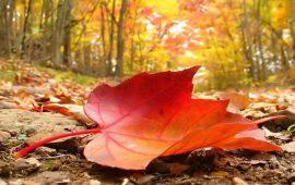 Meteo, addio estate: arriva il Grecale che porterà i primi assaggi d'autunno