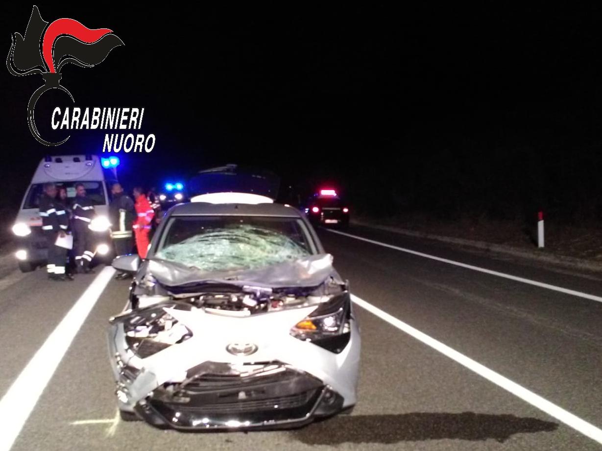 Incidente ieri sera a Villagrande: una pensionata si schianta con l'auto su un asino