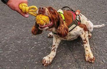 """Il cane Diesel premiato come """"Animale dell'anno"""": salva le vite nei terremoti"""