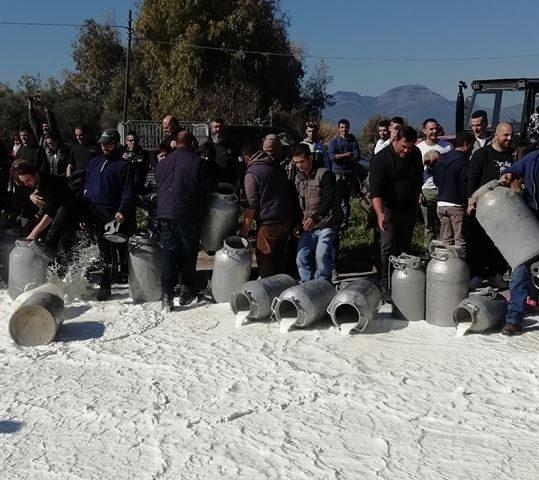 Prezzo del latte a 80 centesimi, i pastori si ribellano. Falchi e Sanna: «Stesse condizioni dell'anno scorso»