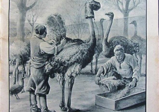 Personaggi d'Ogliastra. Peppino Meloni, che a Tortolì aprì il primo allevamento di struzzi