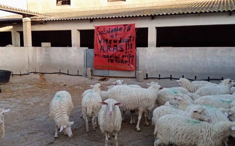 La foto: la solidarietà di un pastore che conosce la guerra per il lavoro, verso chi è oggi in trincea