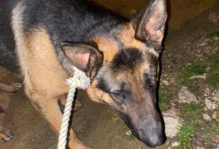 """Lieto fine per il """"cucciolone"""" recuperato ieri notte da ANPANA Ogliastra nella zona Artigianale di Tortolì"""