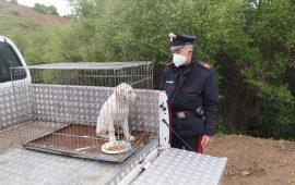Cucciolo di cane legato con un peso da 1 kg al collo. Denunciato il padrone per maltrattamenti