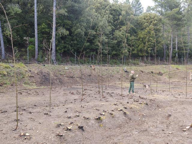 L'Agenzia Forestas e il Comune di Lanusei insieme per la valorizzazione del castagno