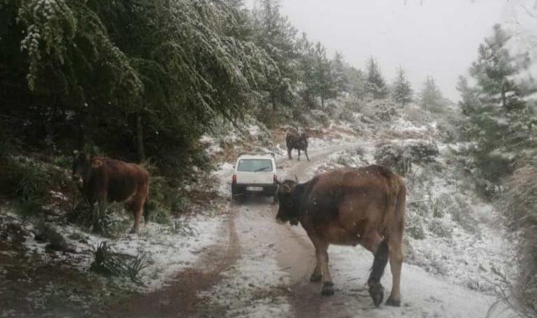 (VIDEO e FOTO) L'insolita primavera in Ogliastra: la neve a Gairo, Seui e Villagrande