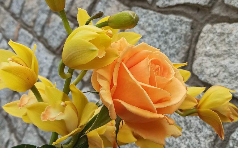 Le foto dei lettori. La grande bellezza della primavera in Ogliastra