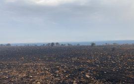 """Notte di fuoco anche per l'Ogliastra. Coldiretti: """"Una vera catastrofe, campagne sotto assedio"""""""