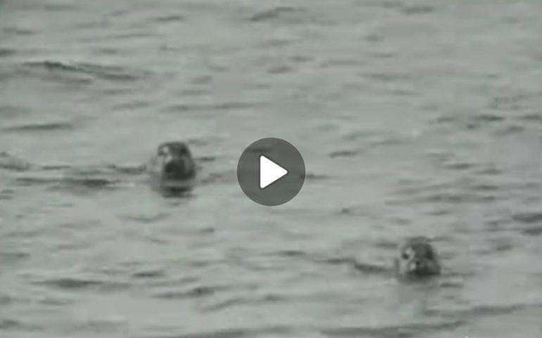 (VIDEO) Cala Gonone, 1969: quando ancora la foca monaca popolava i nostri mari