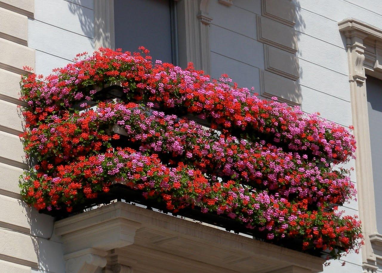Cagliari villanova si fa bella al via il concorso for Piante fiorite perenni da esterno