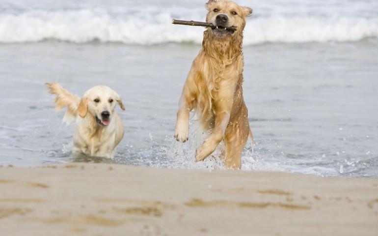 Tortolì, la Dog Beach nella spiaggia Zaccurru