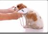 Tortolì. Iscrizione all'anagrafe canina: applicazione gratuita del microchip martedì 9 febbraio