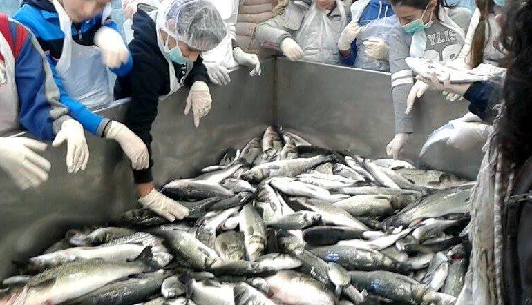 Cernita e lavorazione del pesce. Gli alunni della scuola media di Monte Attu a lezione dai pescatori