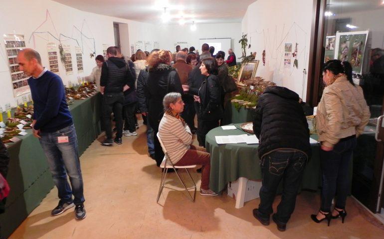 La mostra micologica e botanica di Tortolì conquista il pubblico ogliastrino