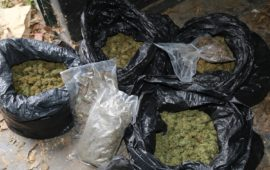 La marijuana trovata dalla Finanza al Gazebo