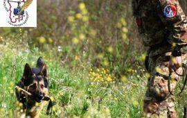 Arzana: i carabinieri indagano sul ritrovamento di un fucile in località Porcilis