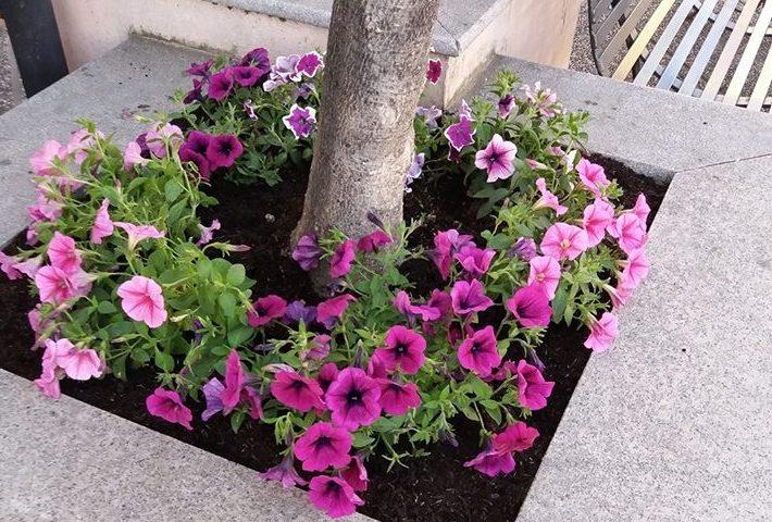 La fotonotizia tortol in fiore regala alla citt le for Aiuole fiorite immagini