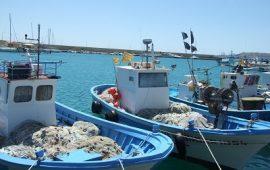 Controlli a tappeto di Nas , carabinieri e Guardia costiera di Arbatax: sequestrati 50 chili di pesce