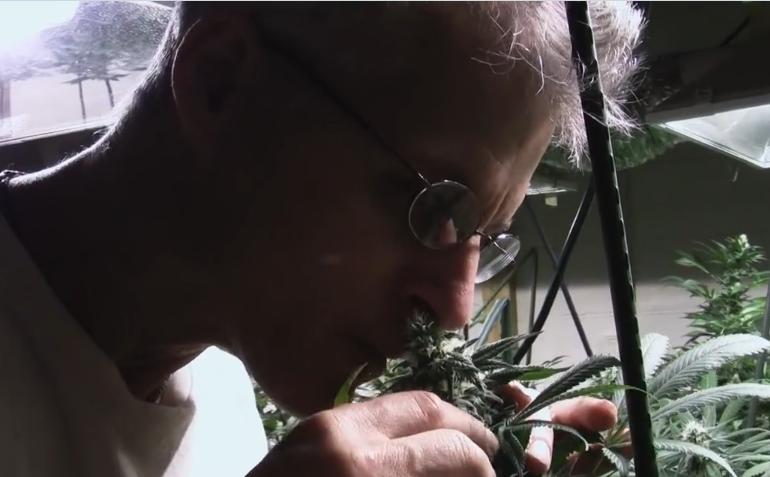 """""""Relegalized"""", il documentario di un regista sardo sulla cannabis che sarà proiettato in Senato (VIDEO)"""
