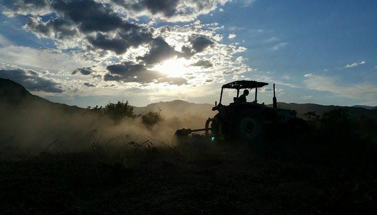 Le foto dei lettori. Il ritorno alla terra in Ogliastra in uno scatto di Salvatore Marongiu