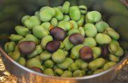 Le fave: sapevate che sono i legumi più coltivati in Sardegna?