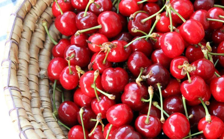 Lo sapevate? In Sardegna ci sono ben 25 varietà di ciliegie. Ecco un'idea per come gustarle: le ciliegie sotto spirito (ricetta)