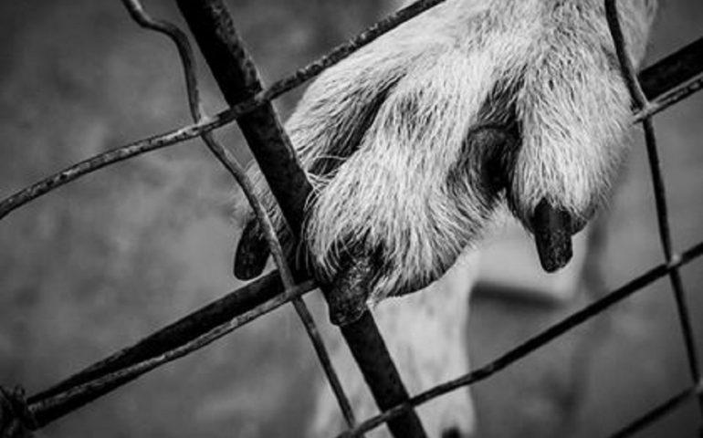 Reportage fotografico. Vita da rifugio: le bellissime immagini dell'amore che lega i volontari ai cani