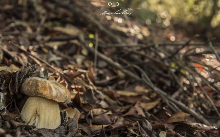 Le foto dei lettori. Scatti d'autunno in Ogliastra