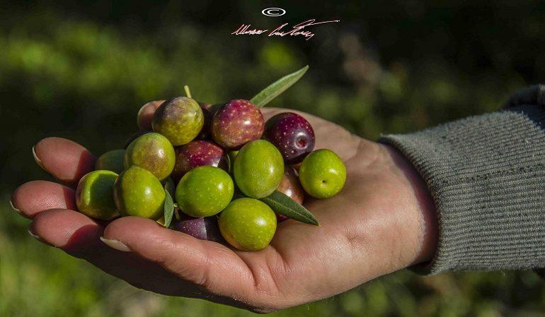 Le foto dei lettori. La mano che raccoglie i frutti di stagione