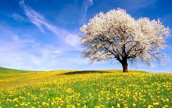 Il primo giorno di primavera è oggi, 20 marzo e non domani: sapete il perchè?