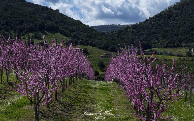 Le foto dei lettori. Primavera ai cancelli di partenza in Ogliastra