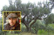 Leonardo Ortu, l'agronomo precipitato dal dirupo, si era ferito potando un olivo