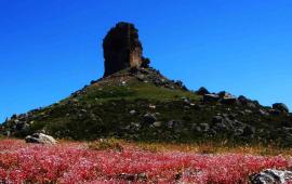 ( PHOTOGALLERY) La Primavera esplode in Ogliastra. Fiori, alberi e campi colorati negli scatti di Cristian Mascia
